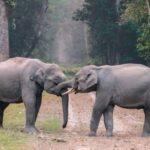 elefanti-pexels-aenic-3551498